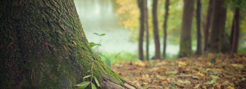 fabrication terrasse bois durable ecologie vendee