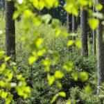 terrasse bois ecologique durable vendee